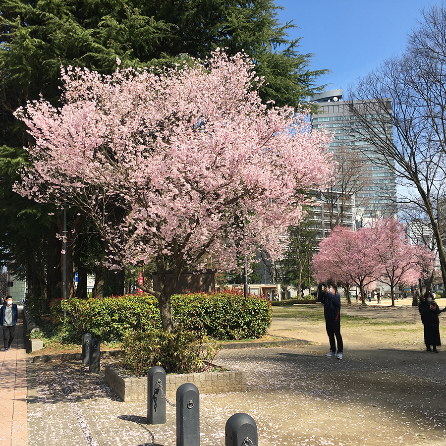 伊達バイク-錦町公園4
